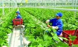 Bảo hiểm nông nghiệp: Yếu tố để phát triển bền vững